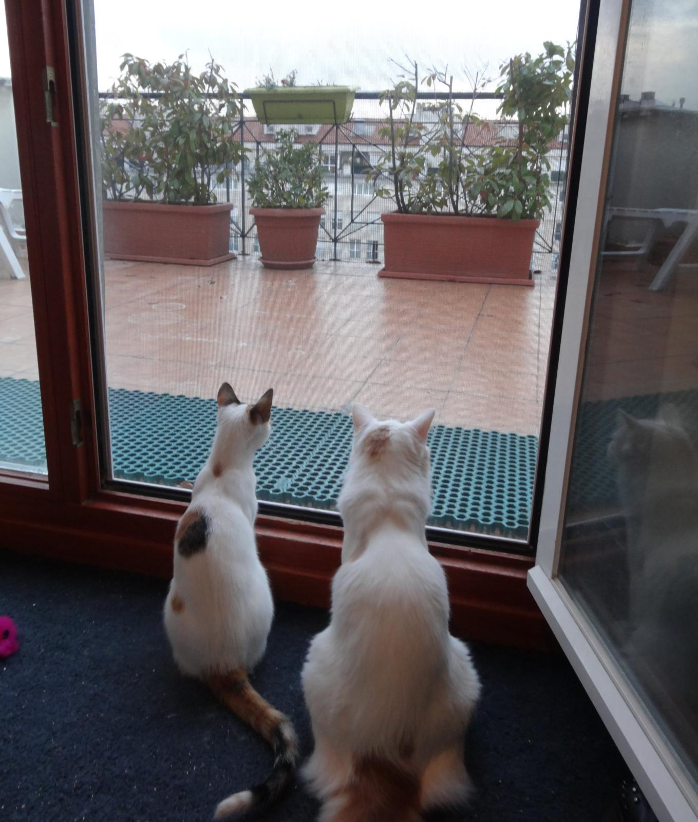 redes - Mosquiteras y redes para las ventanas y cómo proteger a nuestros gatos - Página 10 R1bgg8