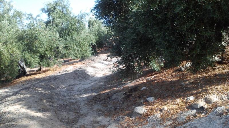 Manejo de suelos y herbicidas Rr8c35