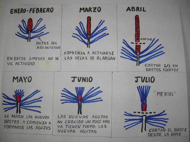 PINZADO DE VELAS EN PINO NEGRO T7xx0m
