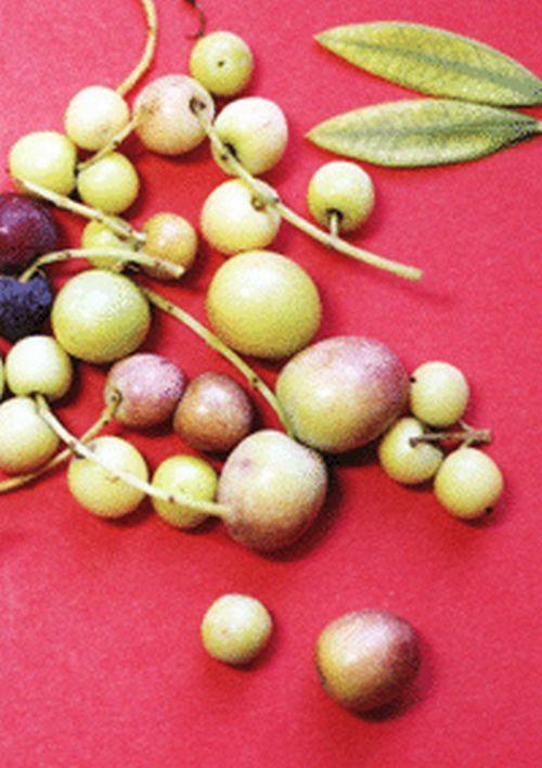 Fotos de carencias de nutrientes 148or38