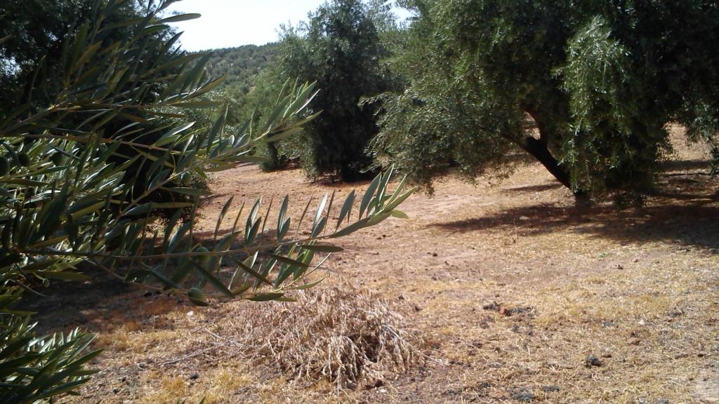 Manejo de suelos y uso de herbicidas 24yy22x