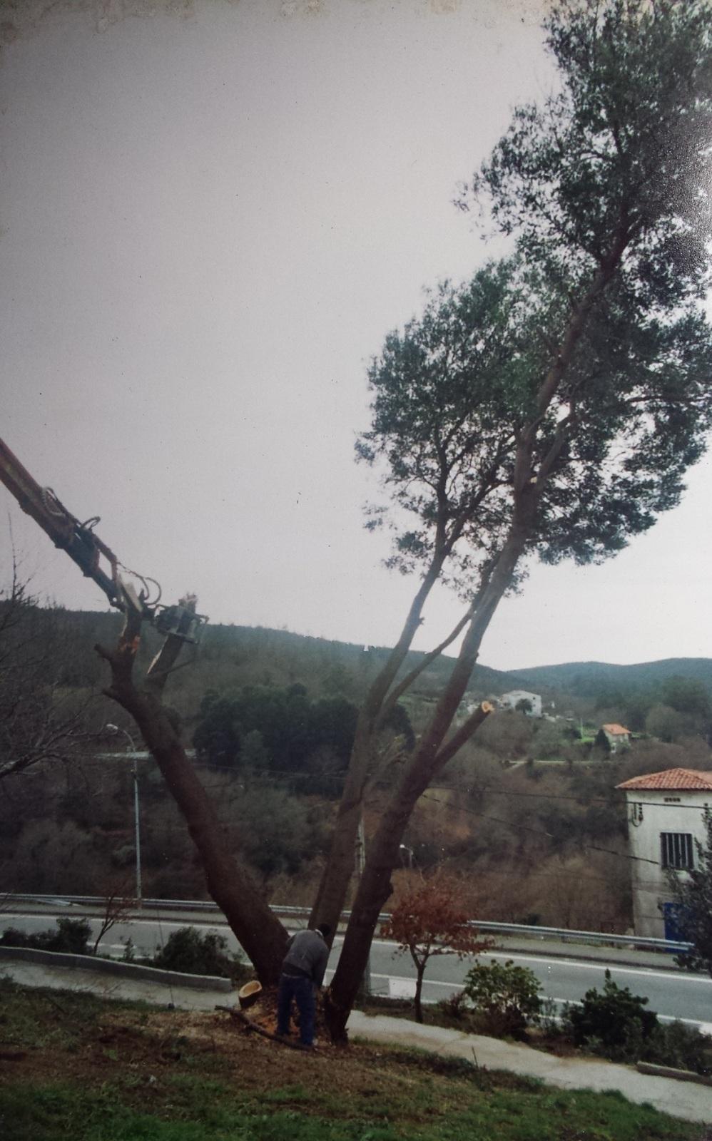 Monte Gallego. - Página 2 2589tgp
