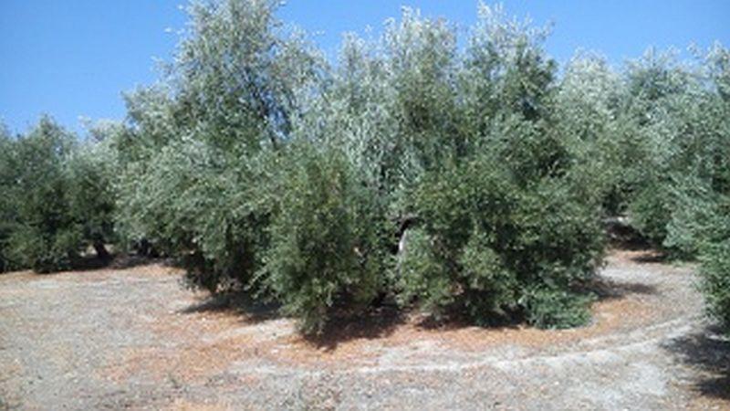 Manejo de suelos y herbicidas 2vwxljm