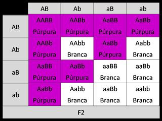 (PUC Minas) Na espécie humana, ocorre um tipo Ffbsj8