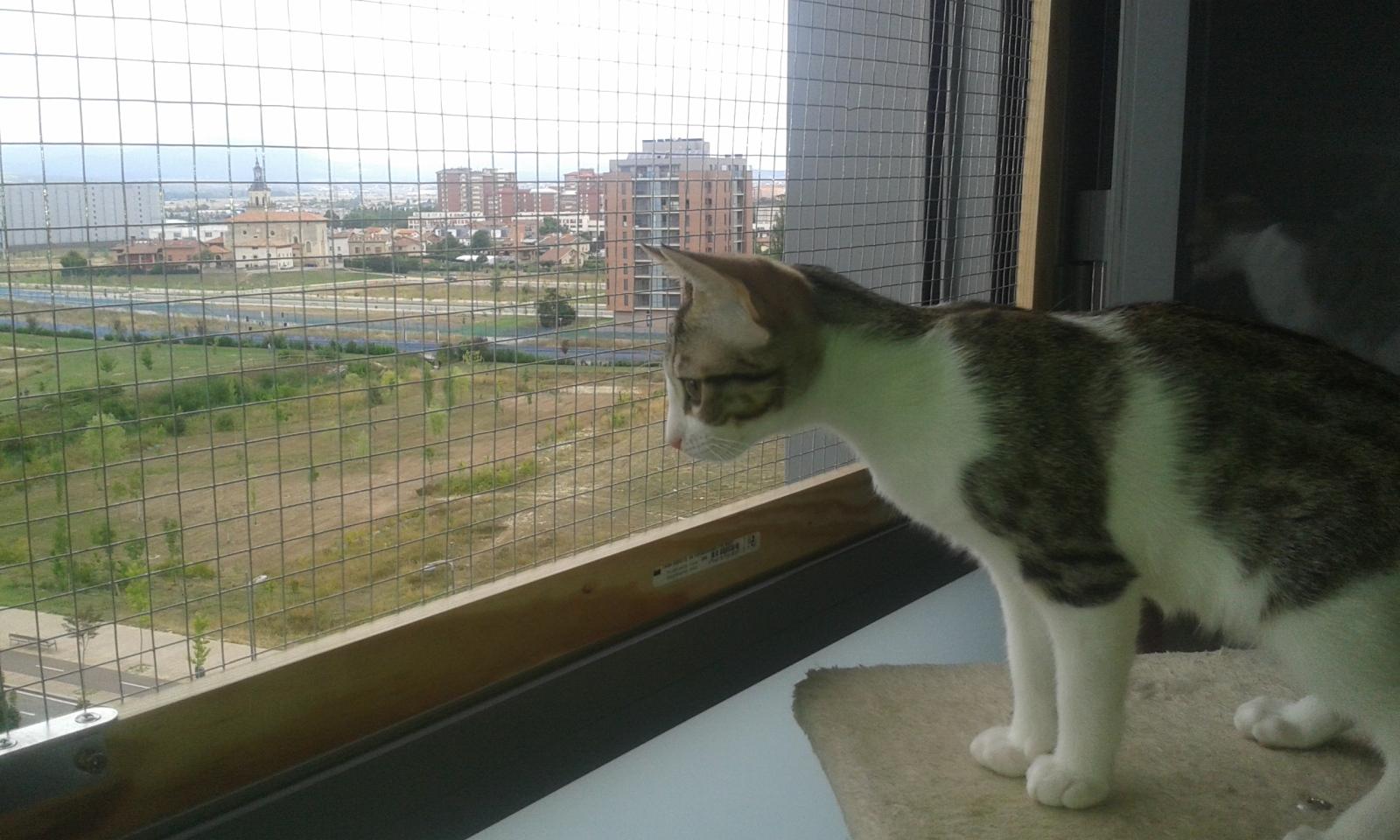 redes - Mosquiteras y redes para las ventanas y cómo proteger a nuestros gatos - Página 10 124v4if