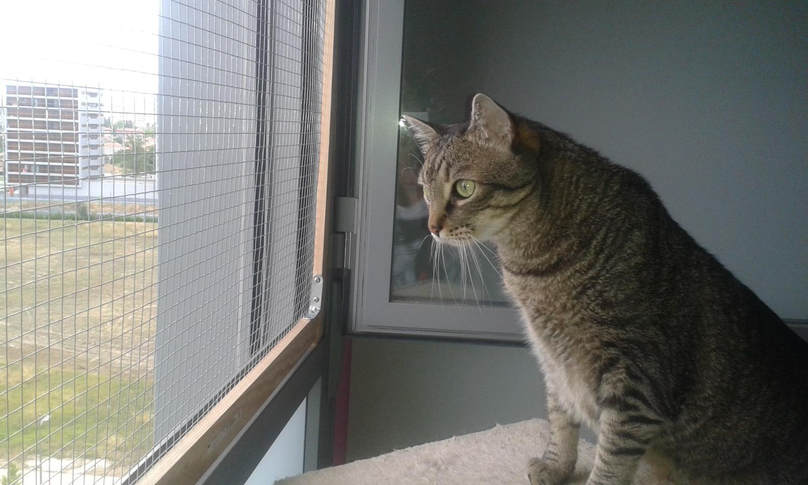 redes - Mosquiteras y redes para las ventanas y cómo proteger a nuestros gatos - Página 10 144020