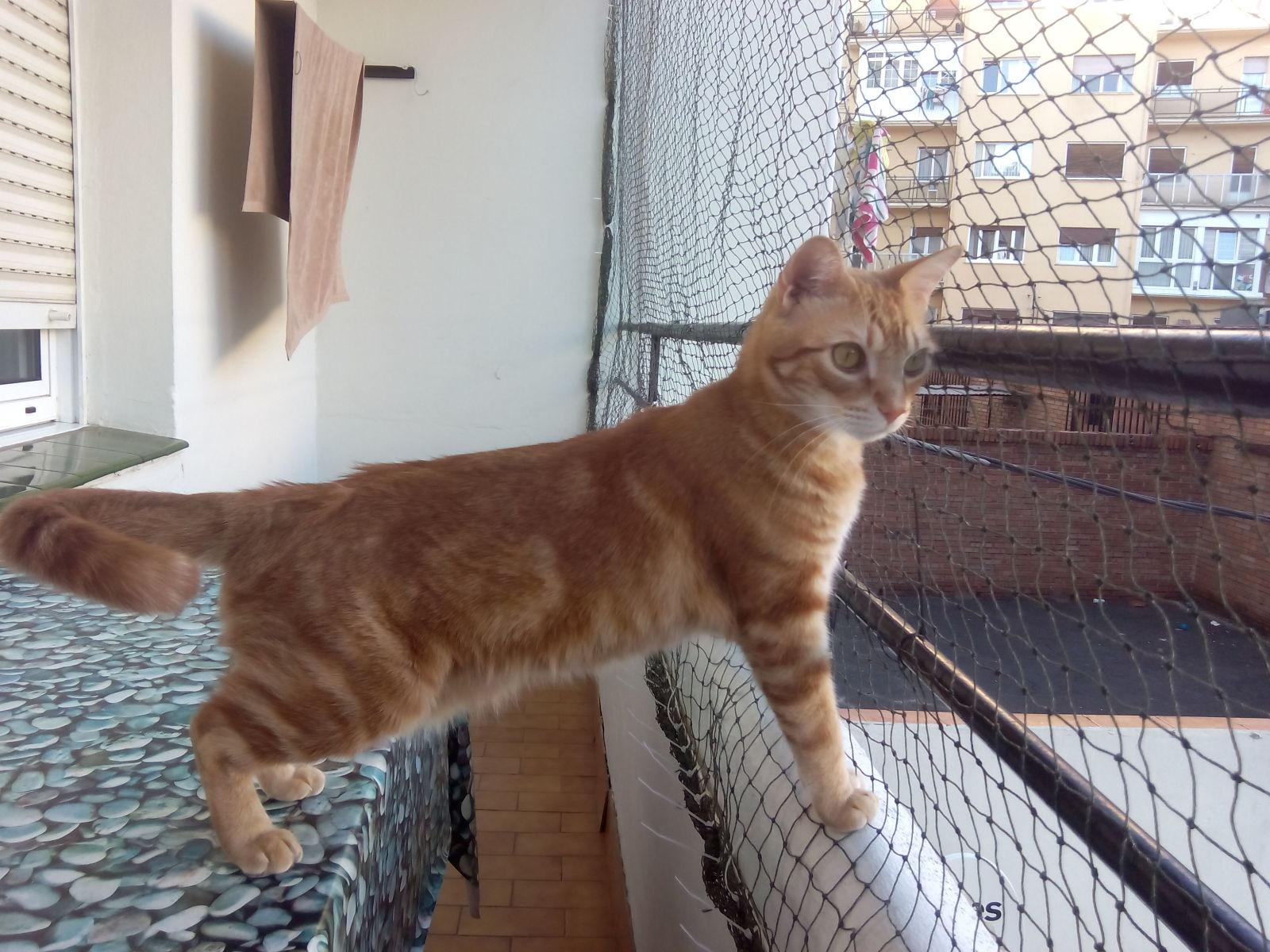 redes - Mosquiteras y redes para las ventanas y cómo proteger a nuestros gatos - Página 10 14lrrll
