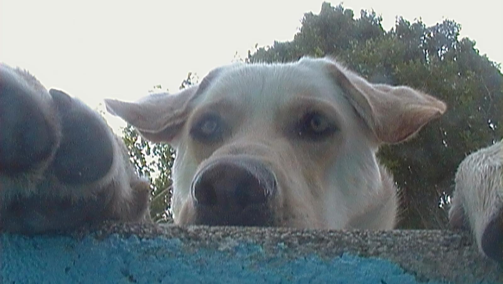 Fotos de nuestras mascotas! 1z4gv8g
