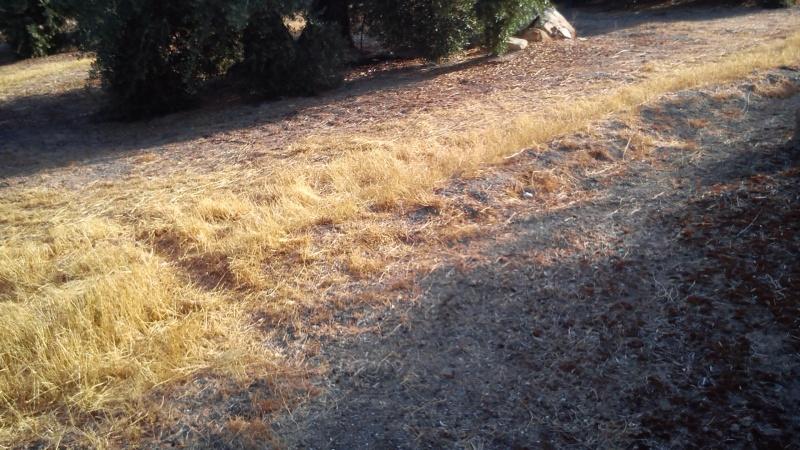 Manejo de suelos y uso de herbicidas 28jgp5s