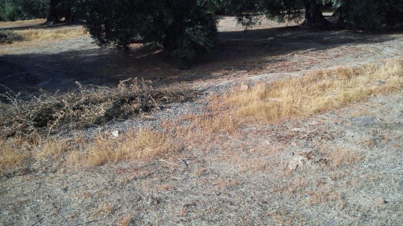 Manejo de suelos y uso de herbicidas 2l1cn9