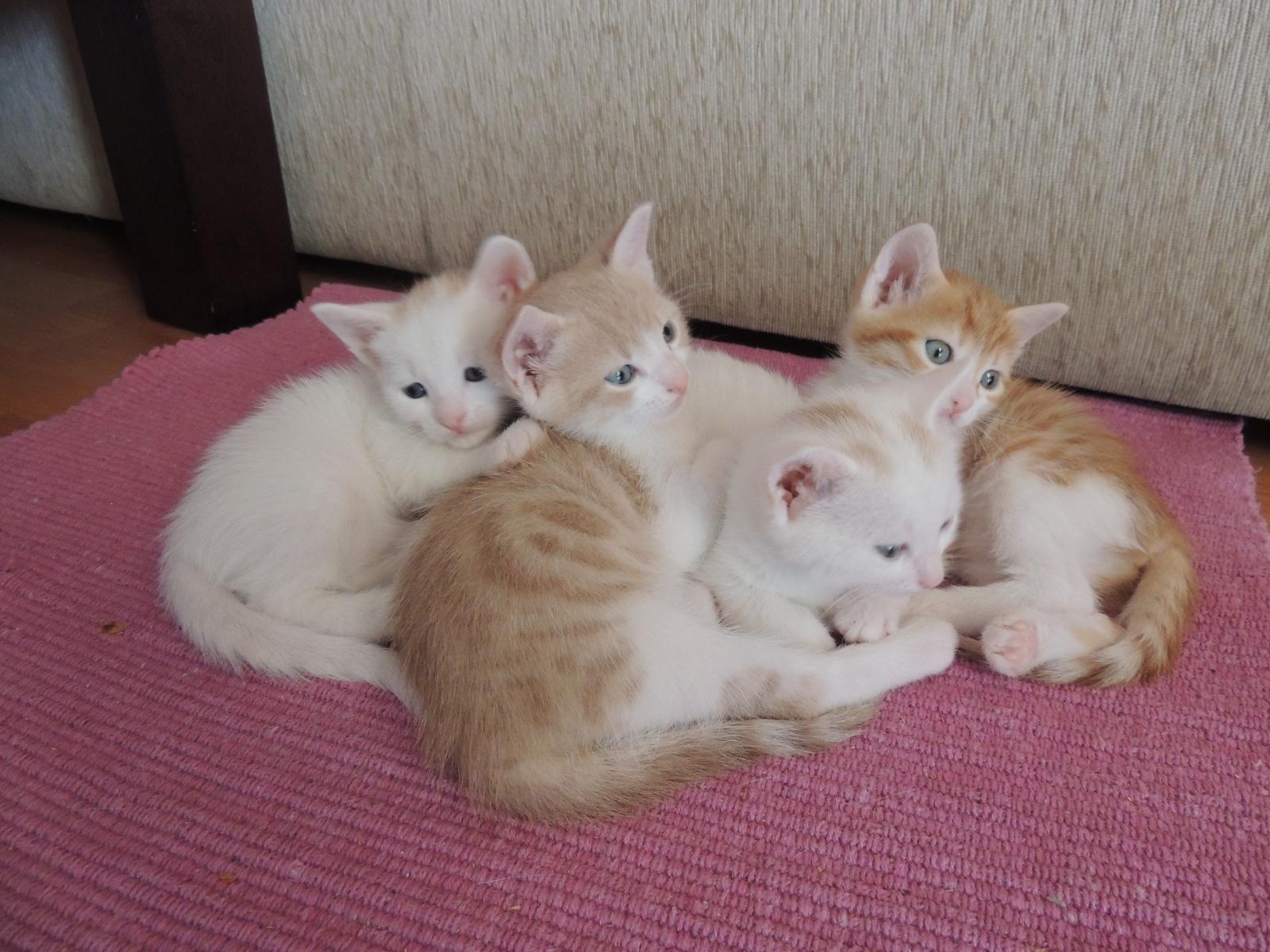 Χαρίζονται γατάκια .  Aθηνα 2lbpe6w