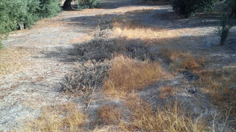 Manejo de suelos y herbicidas 2uy58h0