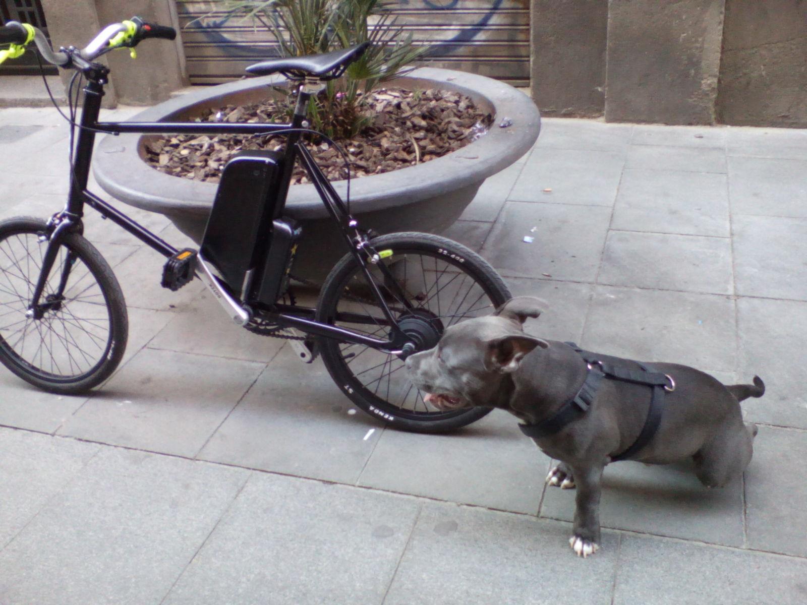 Presenta tu bici eléctrica 30kbxc5