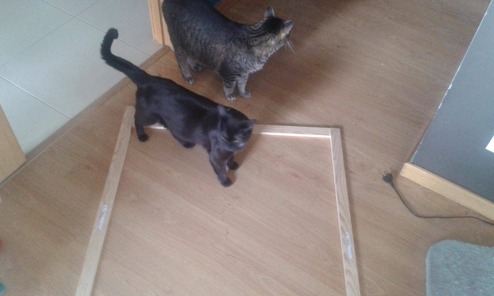 redes - Mosquiteras y redes para las ventanas y cómo proteger a nuestros gatos - Página 10 34e95pz