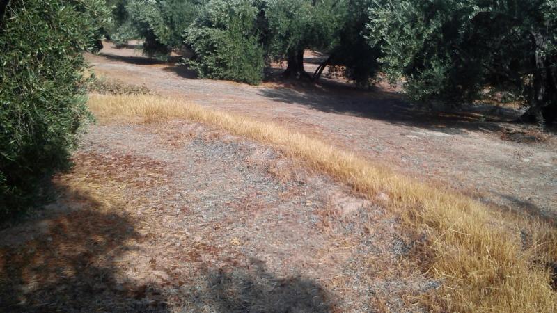 Manejo de suelos y uso de herbicidas 9sz7zn