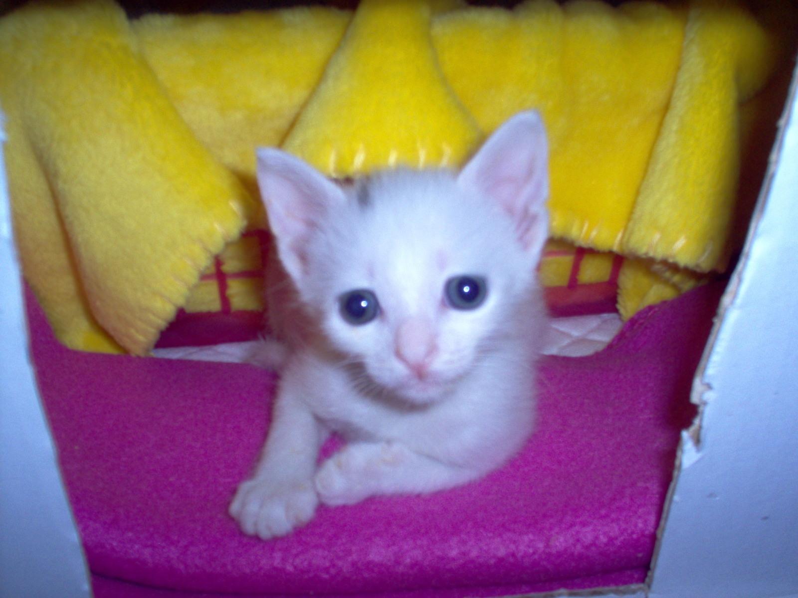 Βοηθεια, γατακι 1 ημερας - Σελίδα 14 Okwk8j