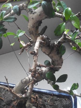 Carmona se queda sin hojas Vpunid