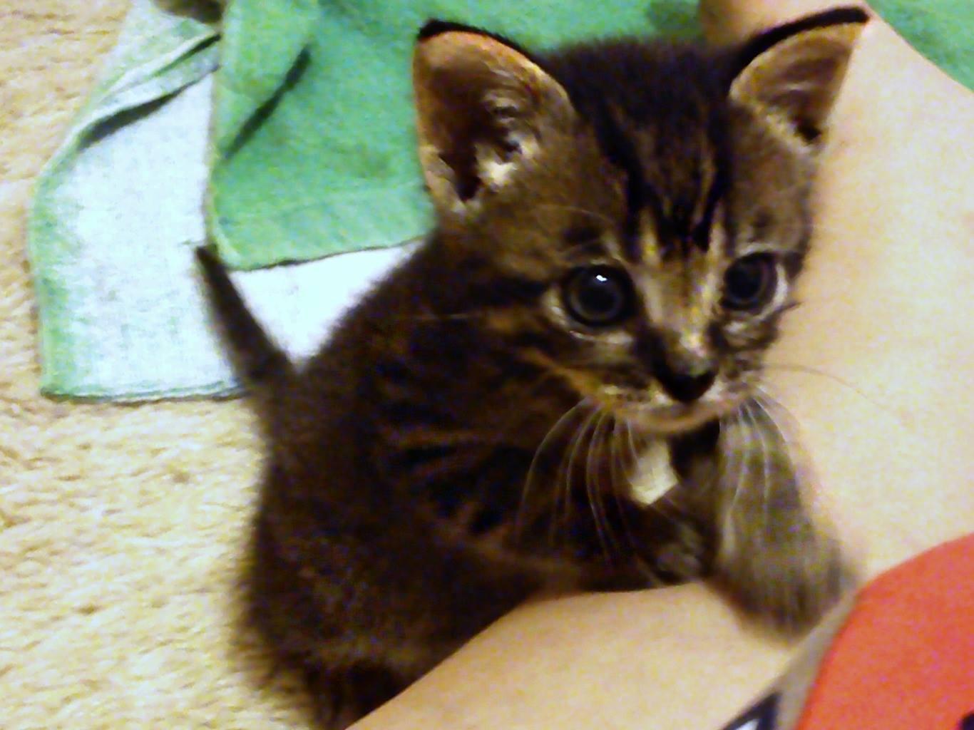 Βοηθεια, γατακι 1 ημερας - Σελίδα 4 Wl7frm