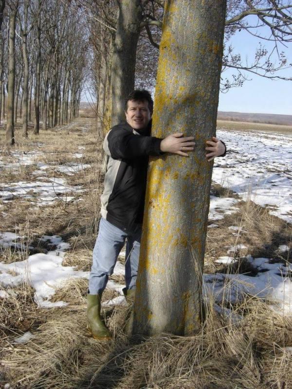 Paulovnija brzorastuće drvo X3v4li