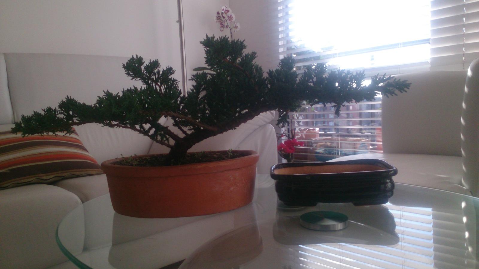 Tamaño maceta para bonsai 11r906s