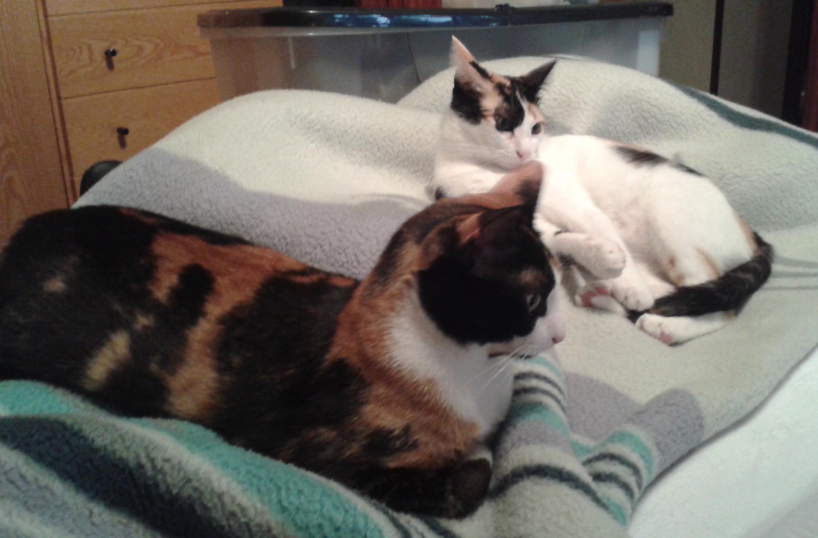 redes - Mosquiteras y redes para las ventanas y cómo proteger a nuestros gatos - Página 9 14kckck