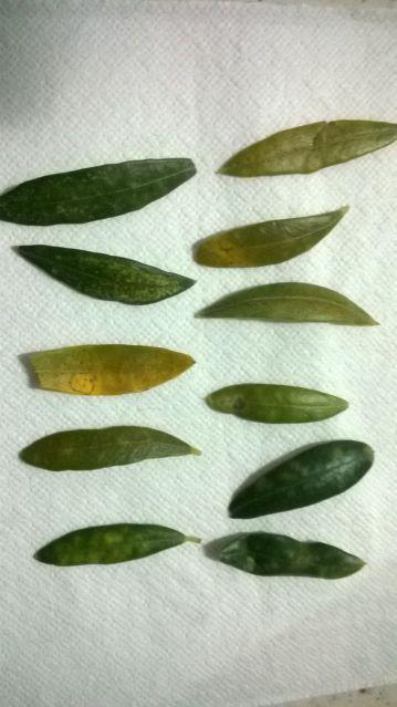Fotos de carencias de nutrientes 18oydx
