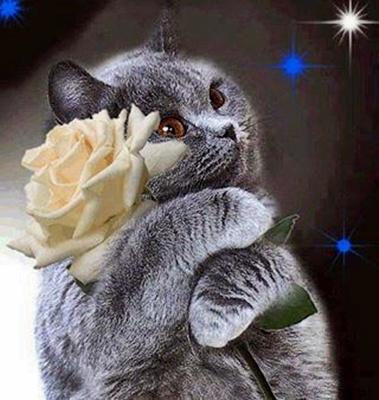 Mensaje de un gato desde el cielo! 23ifnkp