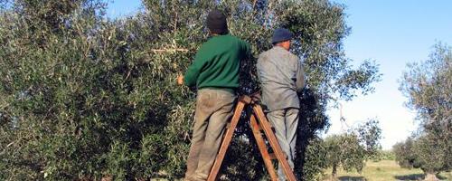 DCOOP importa aceite de oliva 2hn10md
