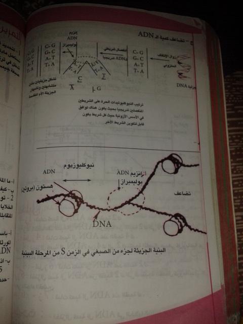 تمارين الفصل الثاني - علوم تجريبية - 2hn1chi