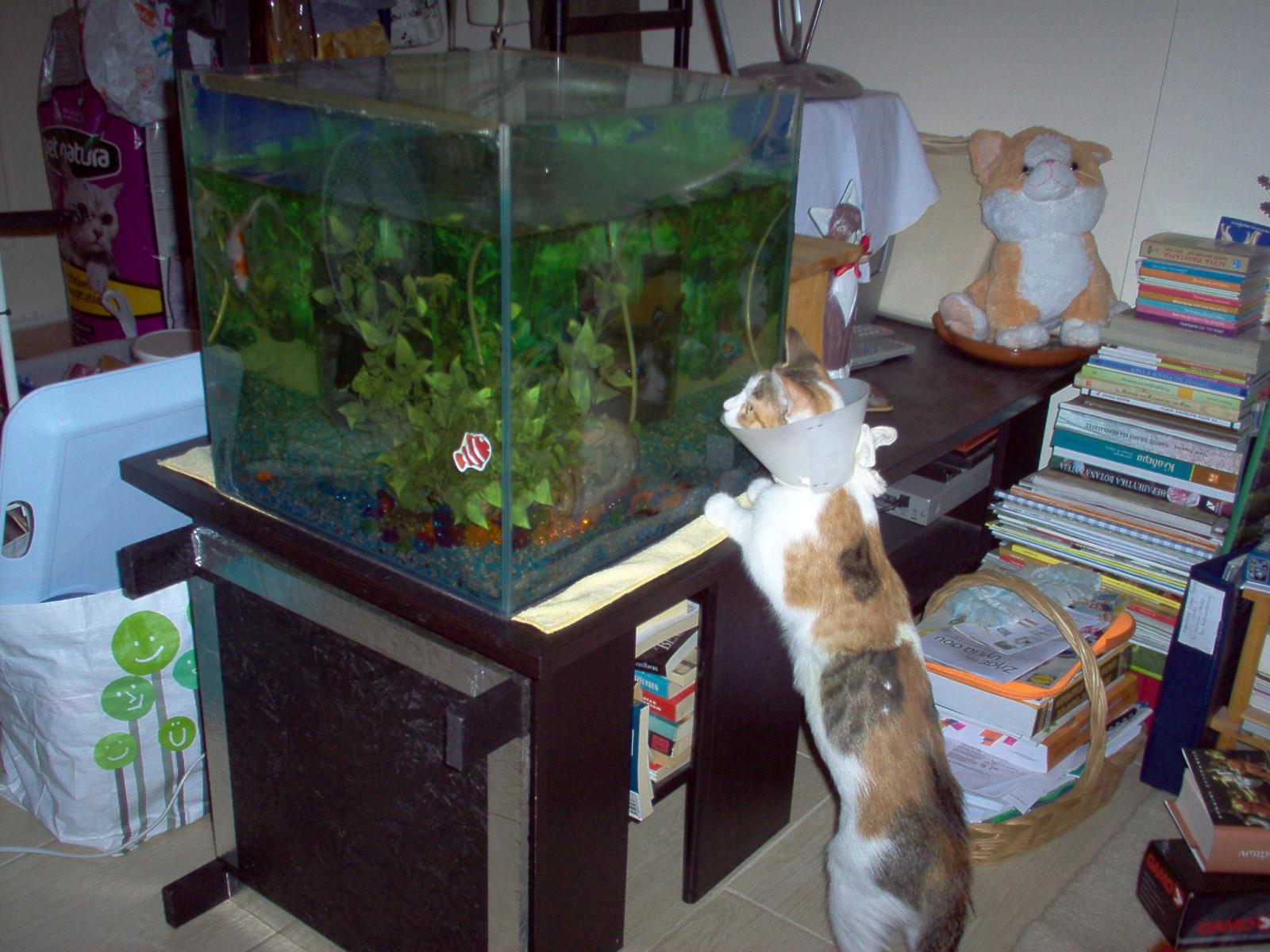 Βοηθεια, γατακι 1 ημερας - Σελίδα 13 2ldc5k1