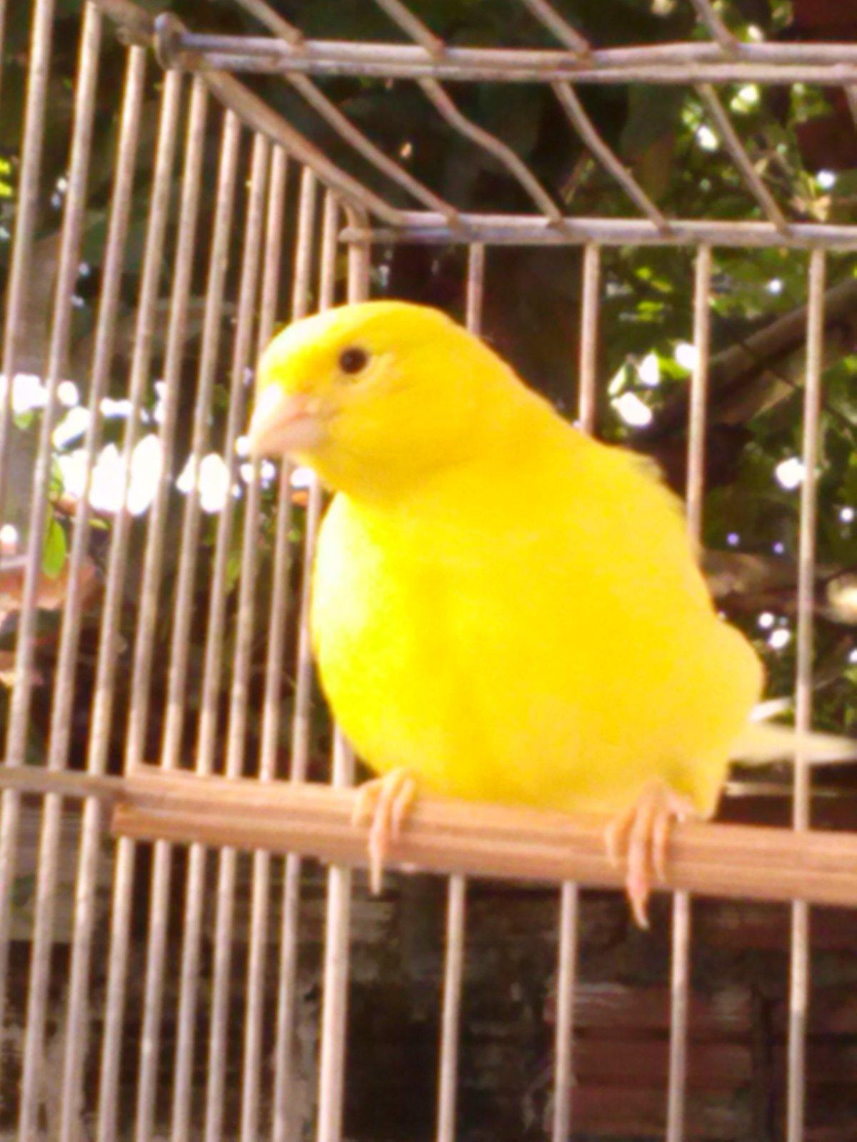 Bigodinho com a plumagem bagunçada 2rfeh6o