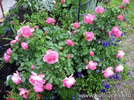 Садоводство и цветы - Страница 2 5y5av