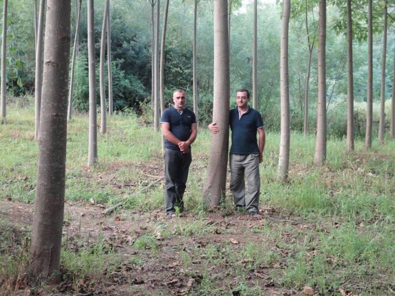 Paulovnija brzorastuće drvo Ae9r86