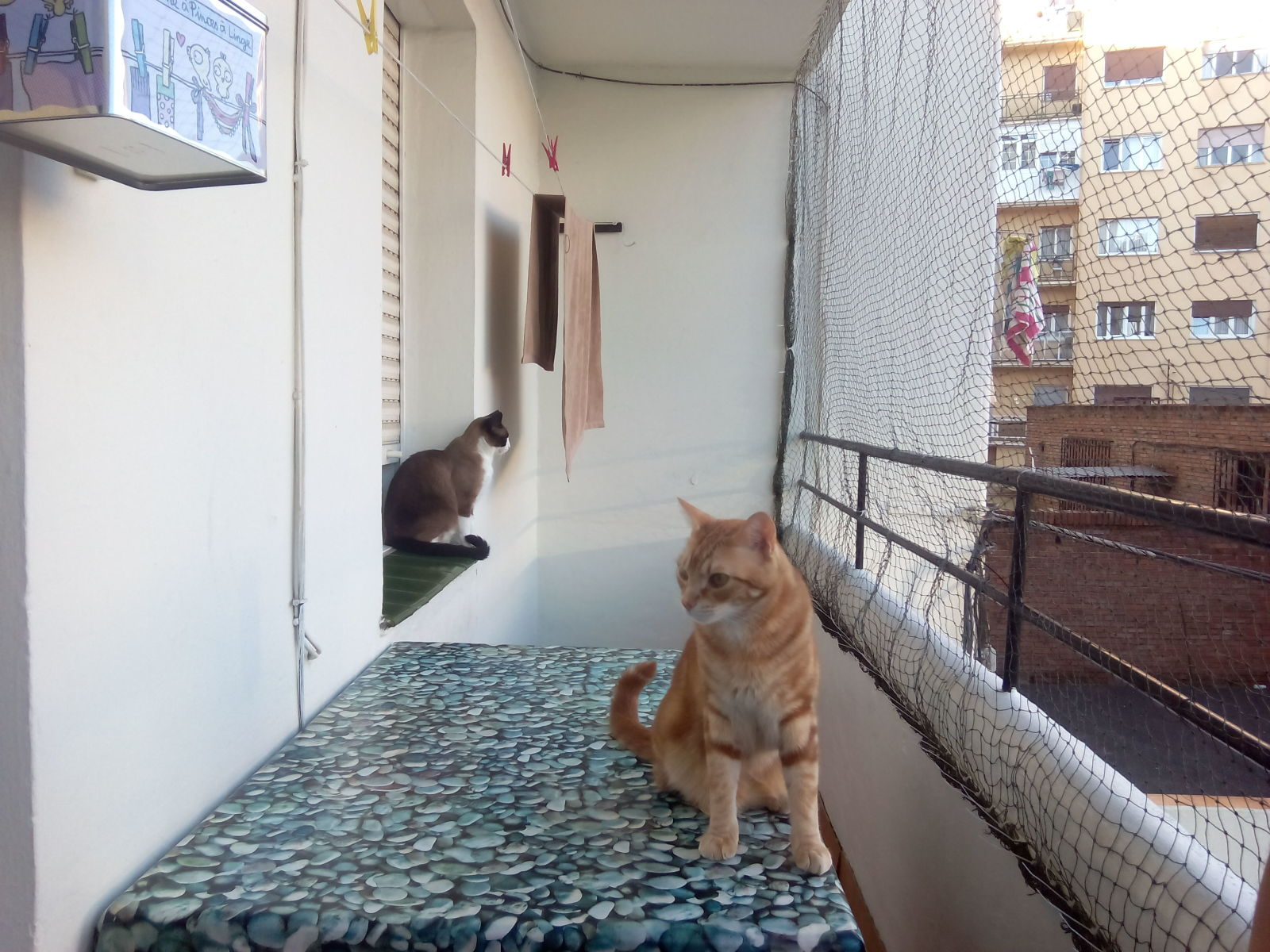 redes - Mosquiteras y redes para las ventanas y cómo proteger a nuestros gatos - Página 10 Fz7xgh