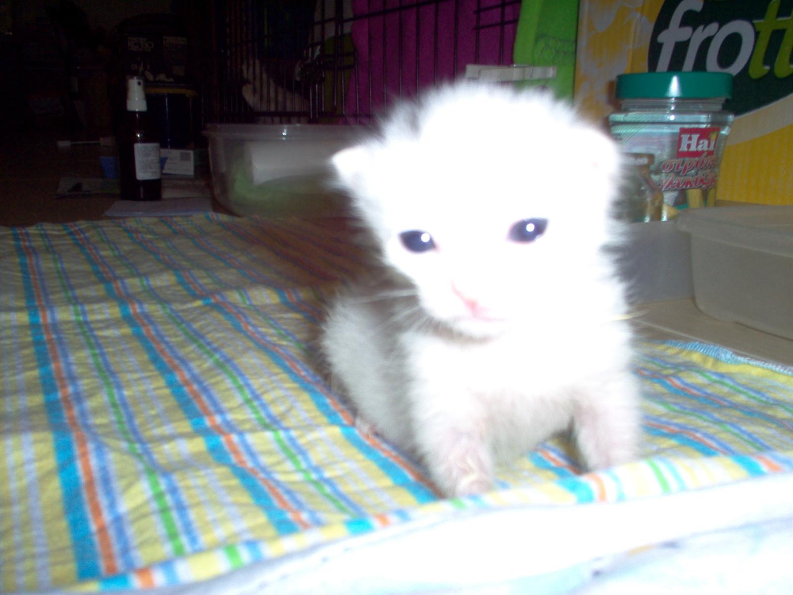 Βοηθεια, γατακι 1 ημερας - Σελίδα 12 Hvumfs