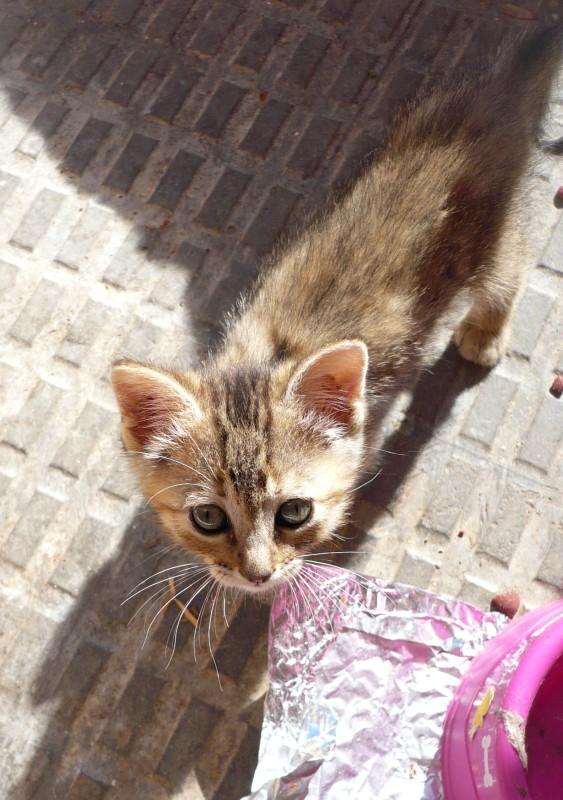 Una de gatos, el foro de nuestras mascotas. - Portal Ifpmw6
