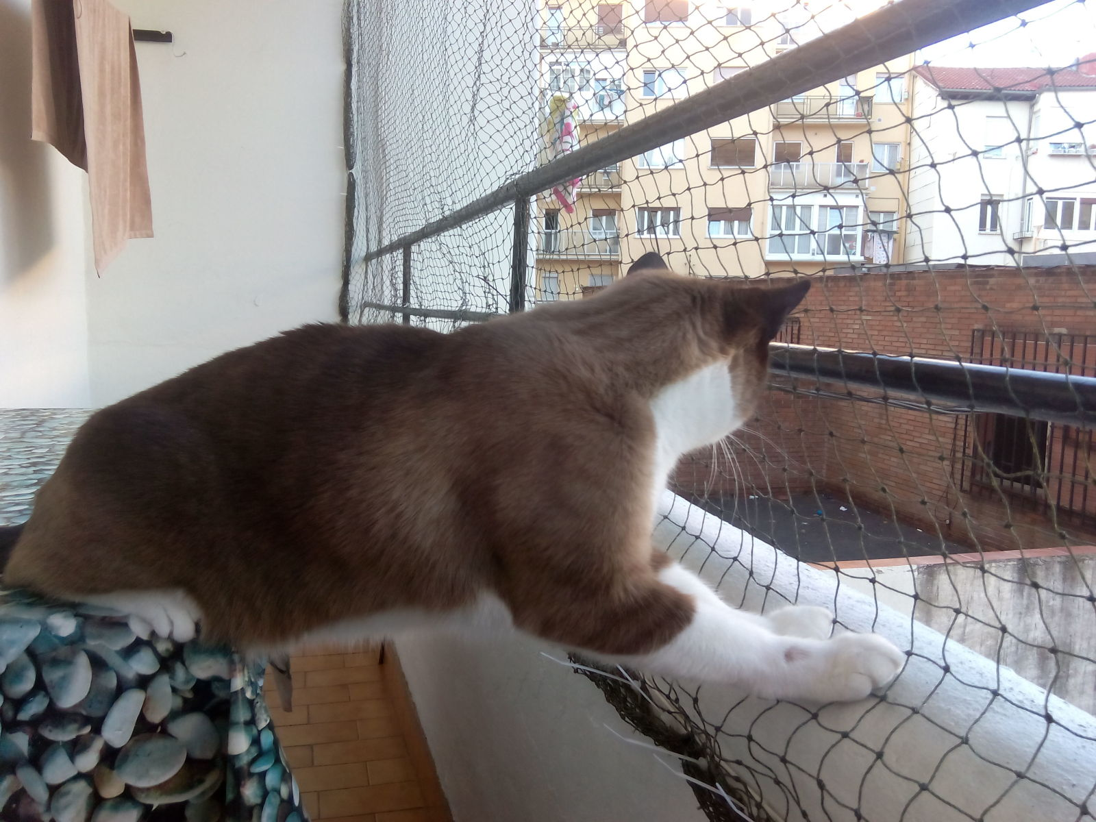 redes - Mosquiteras y redes para las ventanas y cómo proteger a nuestros gatos - Página 10 J6mu14