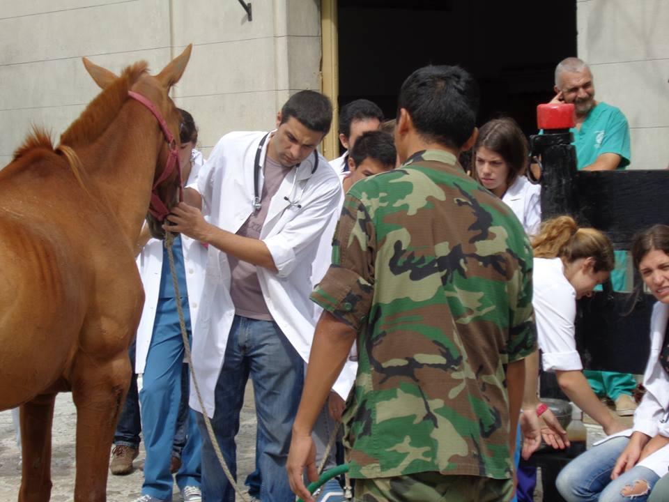 Equinos del Ejercito Argentino N2zi3a