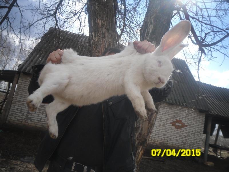 Кролики и магия R86p83