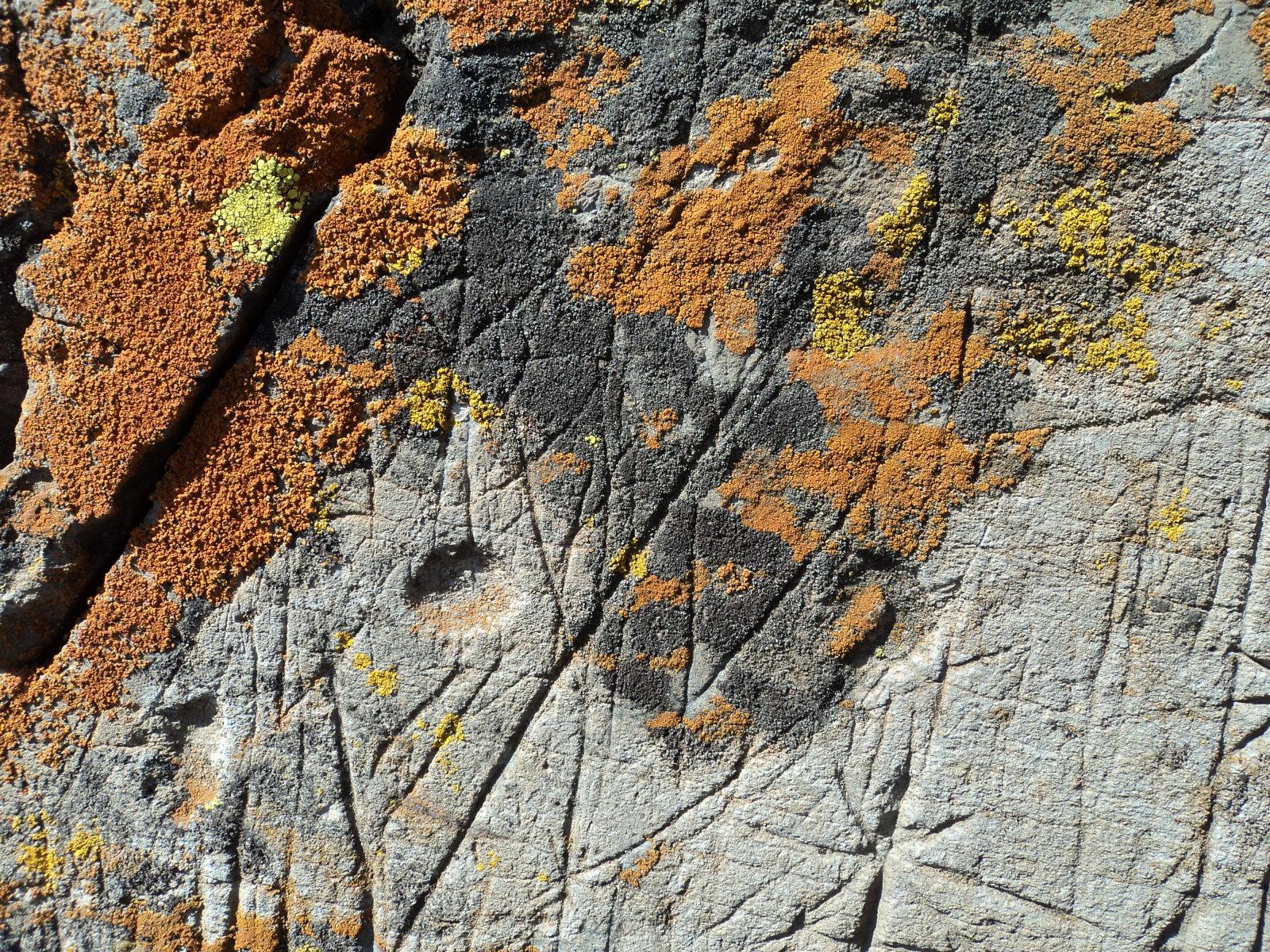 ayuda  para estas marcas en una piedra S3naqr