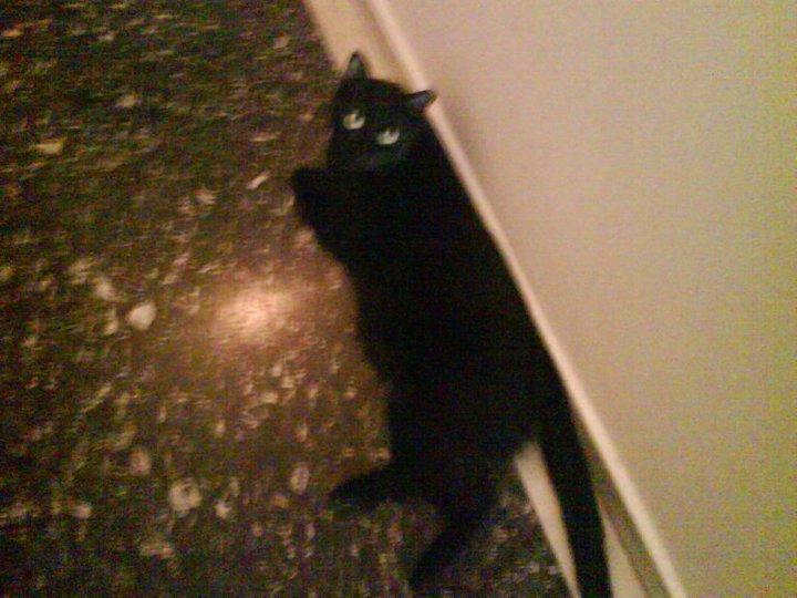 Χαριζονται 2 γατακια Θεσσαλονικη + προβλημα με 3ο γατακι 107oo5v