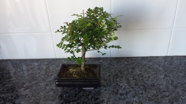 bonsai 166ac1x