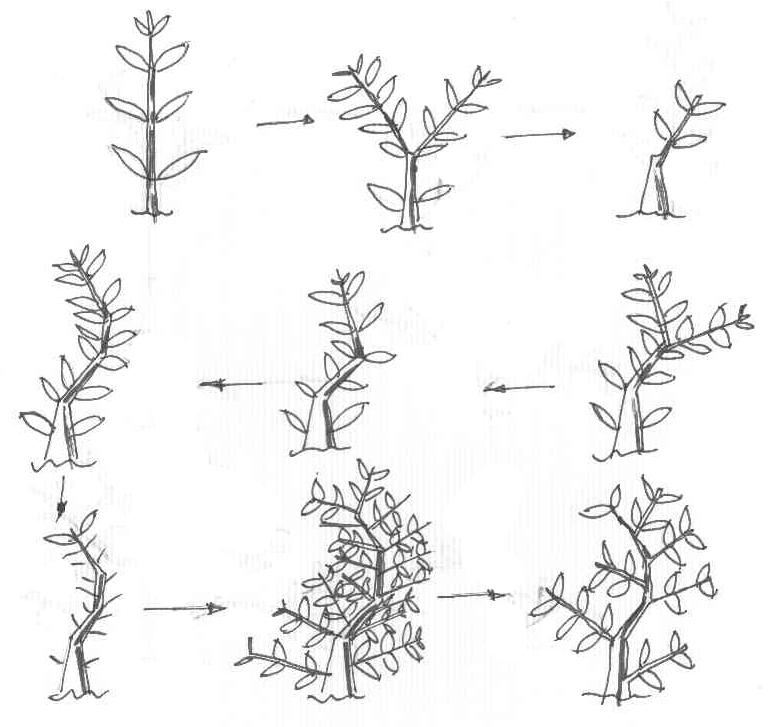Creare una ramificazione: natura all'opera 2cdj3md