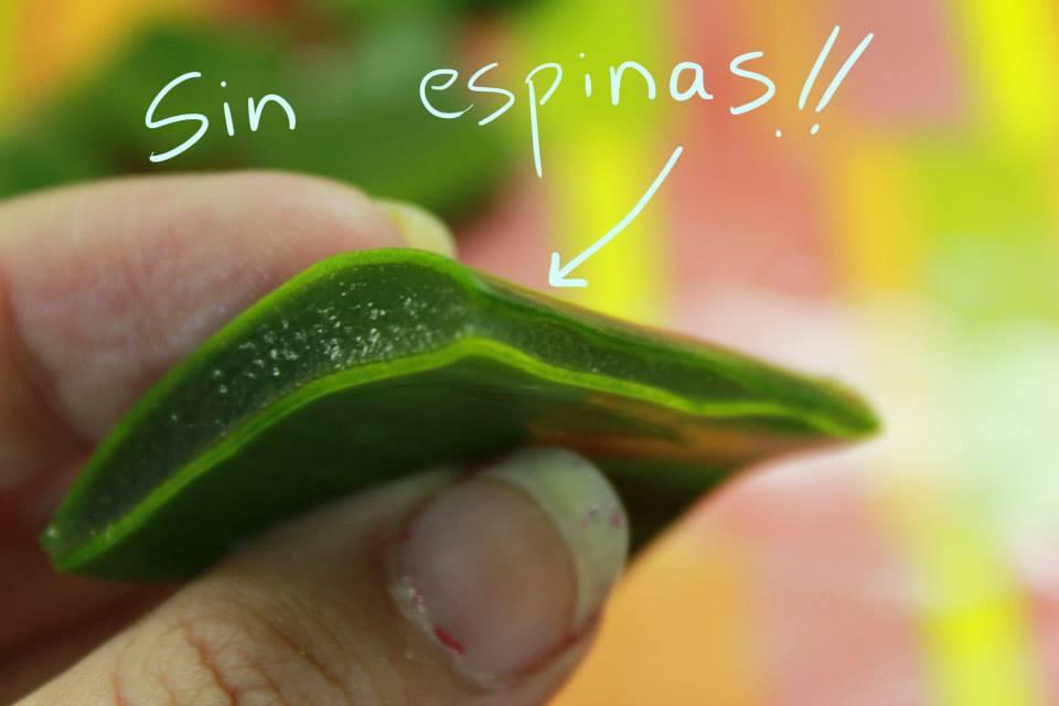 Aplicación de Aloe Vera en Peces 2n8510p
