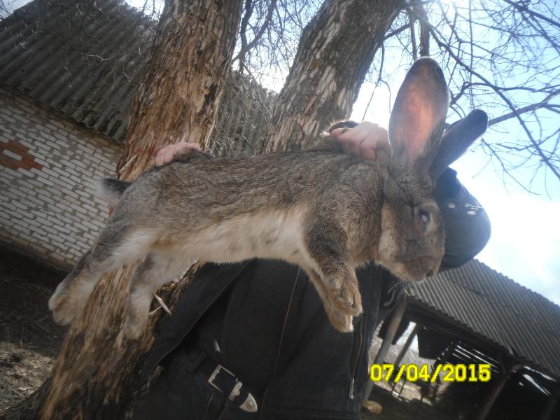 Кролики и магия 2u6zhg6