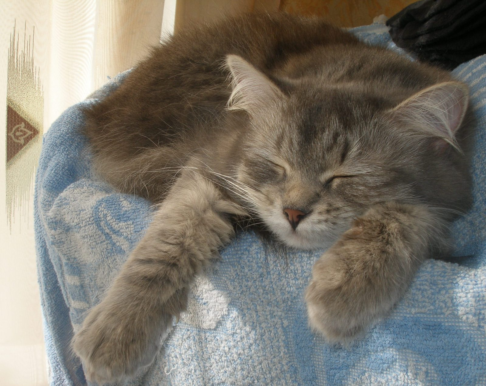 Наши любимые котярчики - Страница 10 2vajbpe