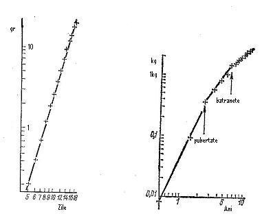 Nivelele Critice din Procesele de Dezvoltare ale Sistemelor Biologice (A. V. Jirmunskiǐ, V. I. Kuzǐmin) 2w6unph