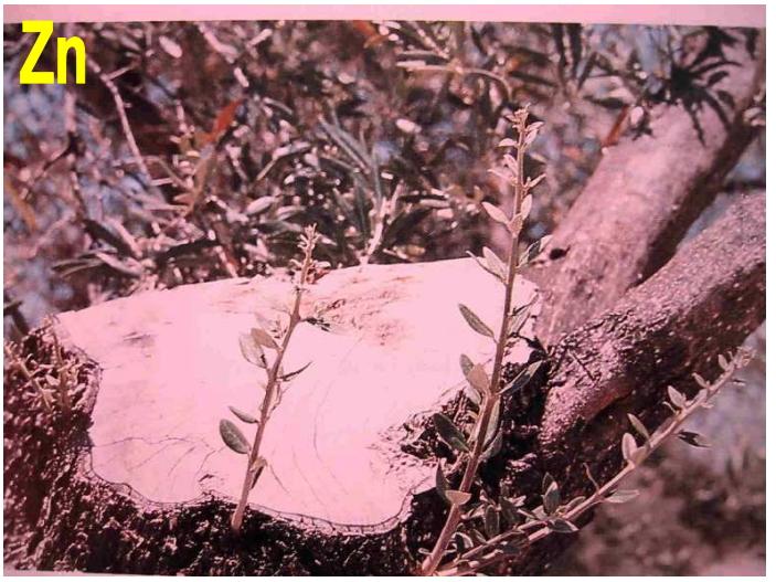 Fotos de carencias de nutrientes Mkaxip