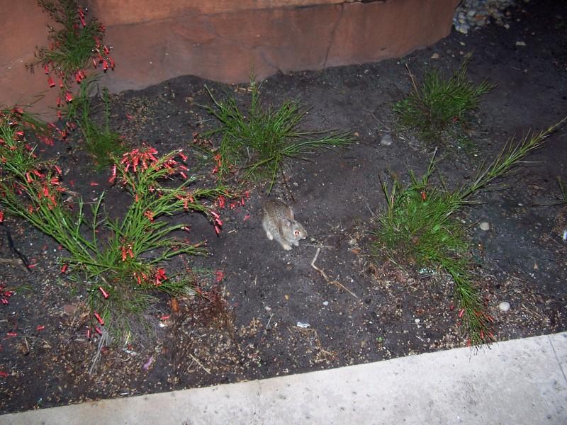 Critters of Coronado Rc535z