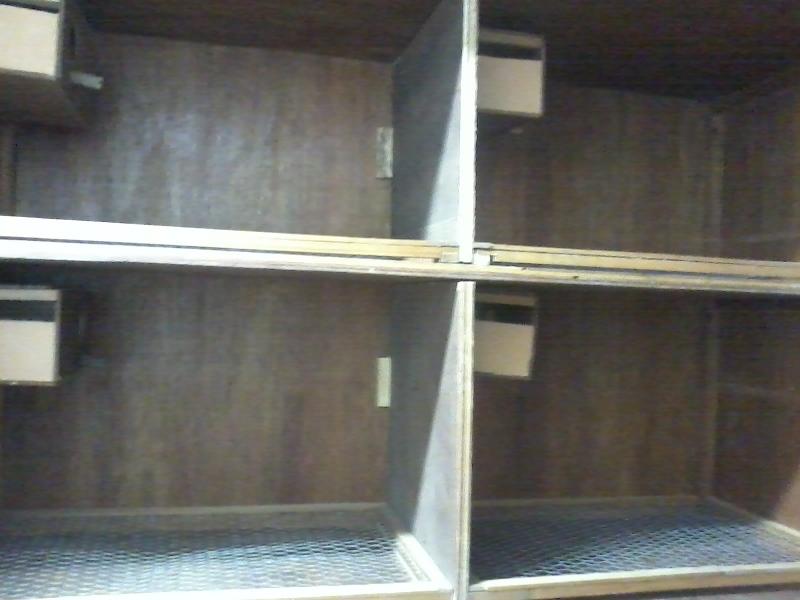 Minhas criadeiras em armário Rtm0r6